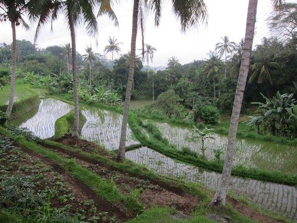 Amandari_Bali_Resort23