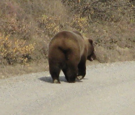 If you are out of your car, this is the end of the bear you want to be looking at.