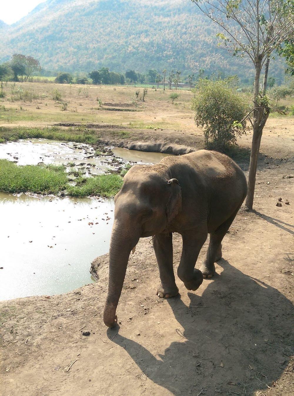Elephants-World-07