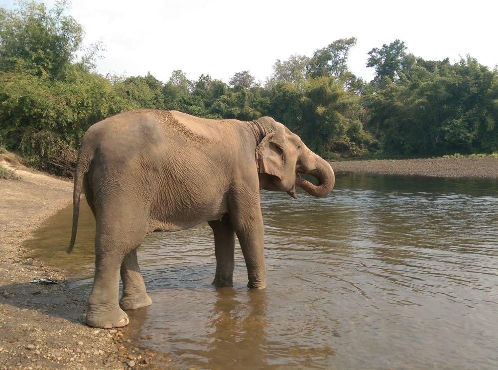 Elephants-World-10