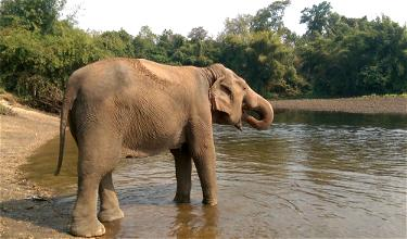 Review: Elephant's World