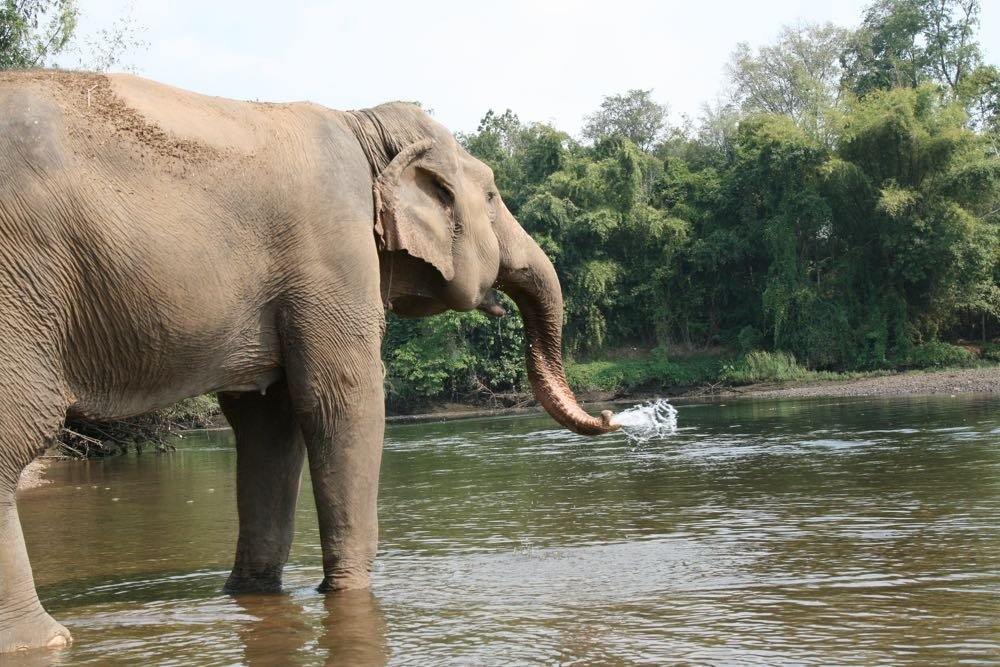 Elephants-World-11