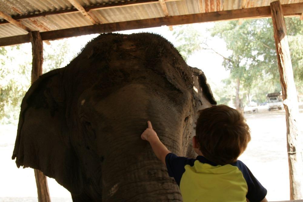 Elephants-World-14