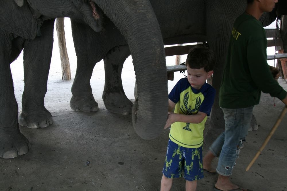 Elephants-World-17