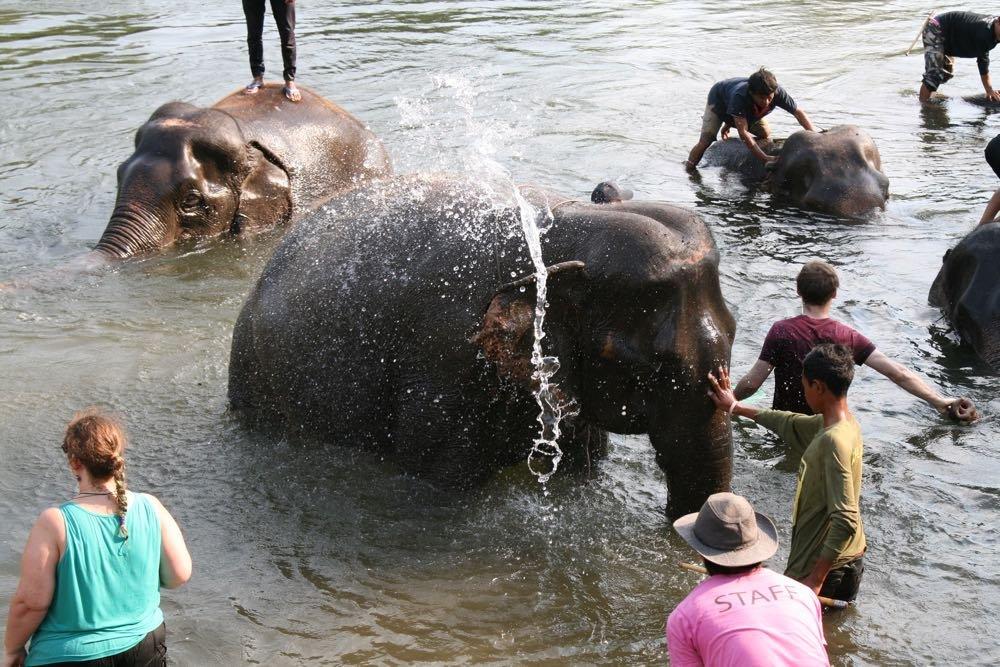 Elephants-World-19