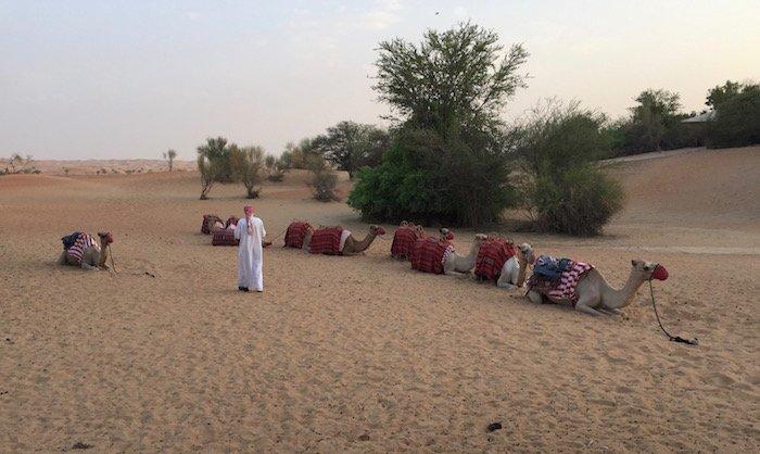 Al-Maha-Activities - 20