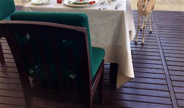 Review: Al Maha Desert Resort Dubai Dining