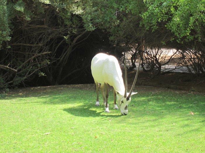 Al-Maha-Resort-Dubai-Rooms - 16