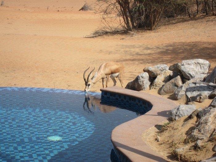 Al-Maha-Resort-Dubai-Rooms - 53