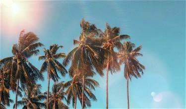 A Creepy-Crawly Vacation Rental Experience
