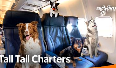 Adorable: Air North Launches Dog Charter Flights